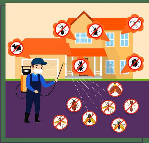 Pest Control Services In Mumbai