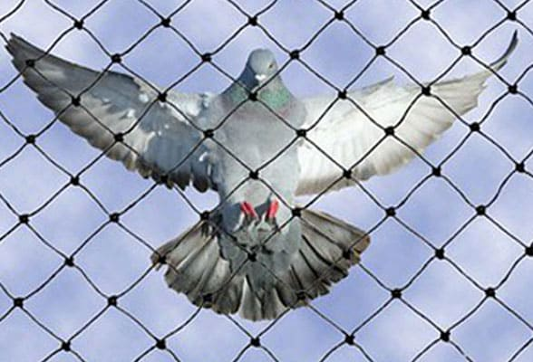 Bird Netting Services