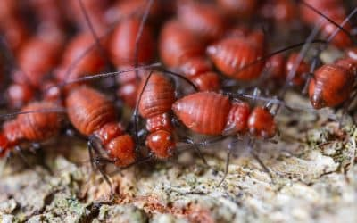 Terrible Termites – How are termites harmful to Humans ?
