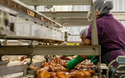 The importance of pest control in Food industry